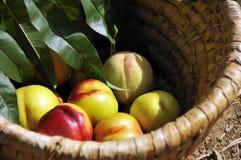 Panier avec des abricots photographie stock libre de droits
