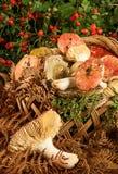 Panier avec des champignons Photo libre de droits