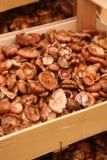 Panier avec des champignons de couche Photographie stock libre de droits