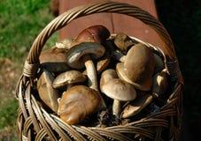 Panier avec des champignons de couche Image stock