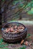Panier avec des champignons de couche Images libres de droits