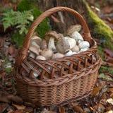 Panier avec des champignons de couche Photos libres de droits