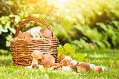 Panier avec des champignons de couche Photo libre de droits