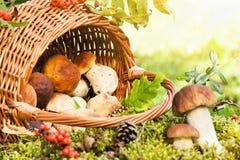 Panier avec des champignons de couche Photographie stock