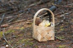 Panier avec des champignons de couche Photo stock