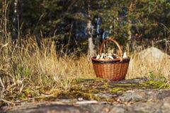 Panier avec des champignons de couche Photos stock