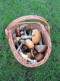 Panier avec des champignons de couche (champignons) Photos libres de droits