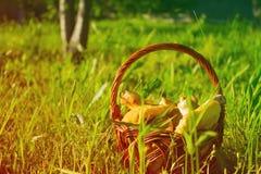Panier avec des champignons, panier avec des champignons sur une herbe verte Image libre de droits