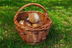 Panier avec des champignons sur l'herbe photographie stock