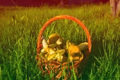Panier avec des champignons sur une herbe verte au printemps Photo stock