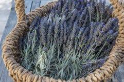 Panier avec des fleurs de lavande Image stock