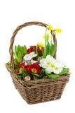 Panier avec des fleurs de source Photographie stock