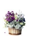 Panier avec des fleurs sur le blanc Image libre de droits