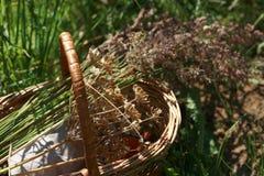 Panier avec des herbes Photo stock