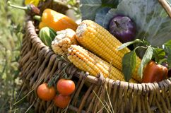 Panier avec des légumes photos libres de droits