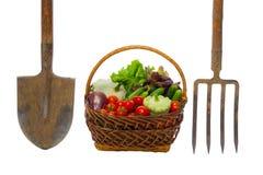 Panier avec des légumes et des outils de jardin sur le blanc Photos stock