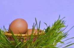 Panier avec des oeufs sur l'herbe. Image stock