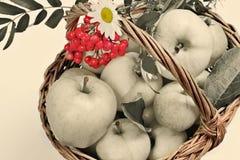 Panier avec des pommes Images libres de droits