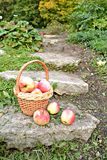 Panier avec des pommes Image libre de droits