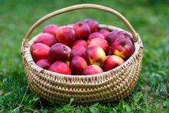 Panier avec des pommes dans l'herbe Photographie stock