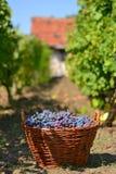Panier avec des raisins image stock