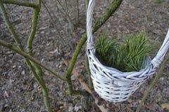 Panier avec la branche de pin Photos stock