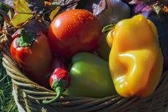 Panier avec le fond de légumes frais de la nature photographie stock