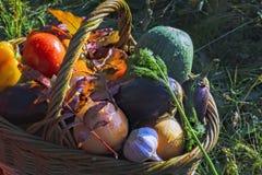 Panier avec le fond de légumes frais de la nature image libre de droits