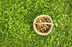 Panier avec les champignons de couche comestibles Image stock