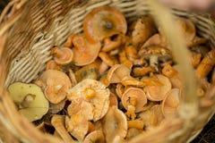 Panier avec les champignons rouges Image stock