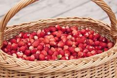Panier avec les fraisiers communs Photographie stock libre de droits
