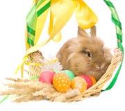 Panier avec les oeufs et le lapin colorés Photos stock