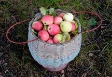 Panier avec les pommes rouges Photographie stock libre de droits
