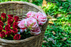 Panier avec les roses rouges et les roses roses sur un fond d'herbe Foyer sur des roses Photo libre de droits
