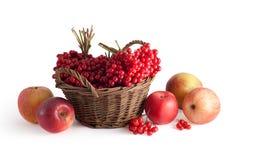 Panier avec un viburnum et des pommes Images stock