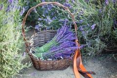 Panier avec une lavande et des ciseaux de cru, Provence, France photos stock