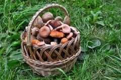 Panier complètement des champignons Image libre de droits