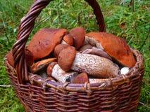 Panier complètement des champignons de couche Photos libres de droits