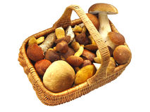 Panier complètement des champignons de couche Images libres de droits