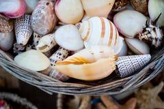Panier complètement des coquillages et des étoiles de mer Image libre de droits