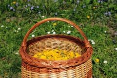 Panier complètement des fleurs jaunes de pissenlit Photographie stock libre de droits