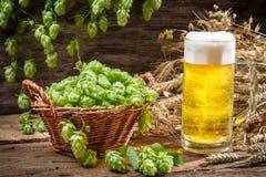 Panier complètement des houblon et d'une bière froide image libre de droits