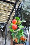 Panier décoratif avec les pommes et les mandarines artificielles Photographie stock
