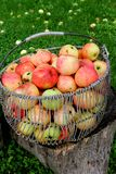 Panier d'Apple Photo stock