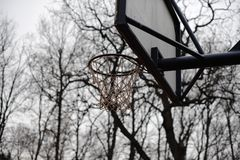 Panier de basket-ball dans les bois Images stock