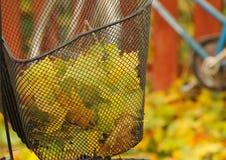 Panier de bicyclette avec les lames d'automne colorées Photo stock