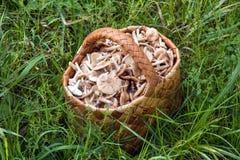 Panier de Birchbark complètement des champignons Photographie stock libre de droits