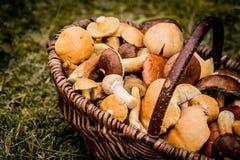Panier de Brown complètement des champignons de forêt Photo libre de droits