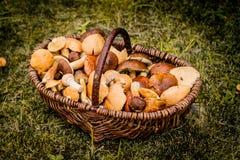 Panier de Brown complètement des champignons de forêt Photographie stock