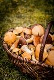 Panier de Brown complètement des champignons de forêt Photographie stock libre de droits